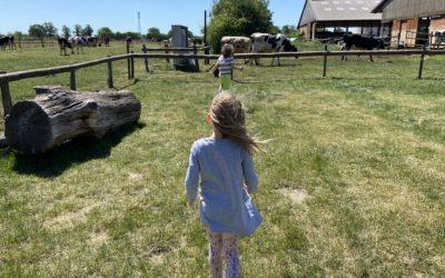 Die Kuh macht muh: Auf dem Almthof in Appen