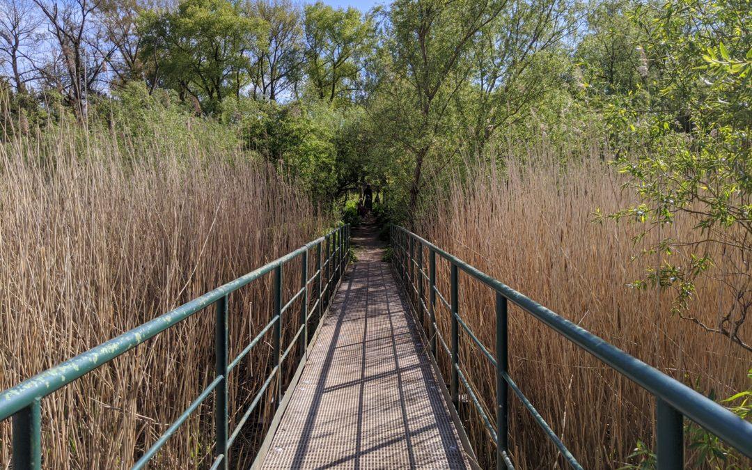 Into the Wild: Entdeckt einen der letzten Tideauenwälder Europas.