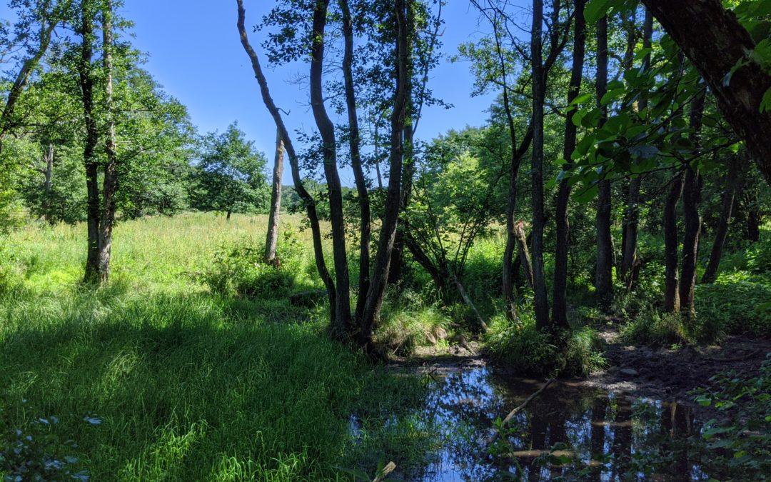 Safari Feeling: Auf dem Gallo-Way durchs Höltigbaum