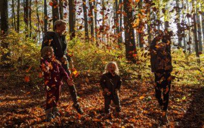 Mehr als nur ein Wald: Naturerlebnis Grabau